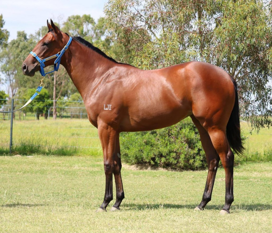 Capitalist x Faustine '19 Bay Filly