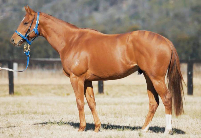 Kbloodstock horse racing syndications